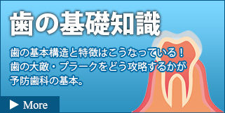 歯の基礎知識